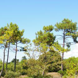 Forêt Camping Notre-Dame-de-Monts
